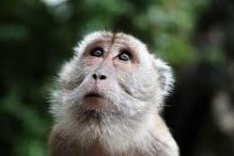 The glory of my monkey mind